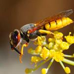 В Коране о самке пчелы